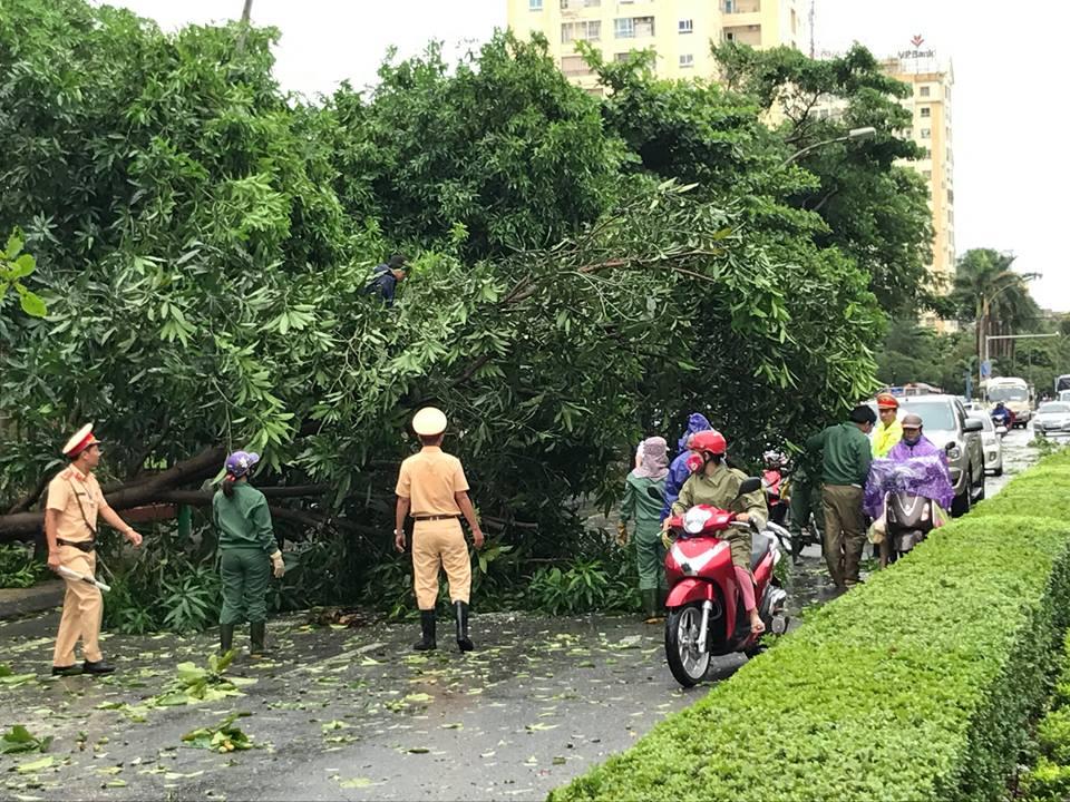 Chùm ảnh: Đường phố TP Vinh - Nghệ An tan hoang sau bão số 2 - Ảnh 7.