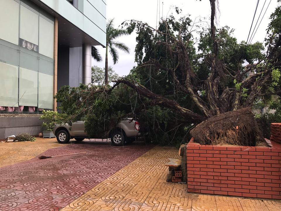 Chùm ảnh: Đường phố TP Vinh - Nghệ An tan hoang sau bão số 2 - Ảnh 6.