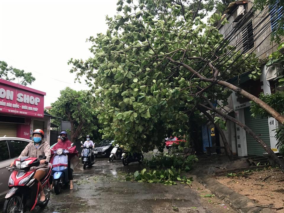 Chùm ảnh: Đường phố TP Vinh - Nghệ An tan hoang sau bão số 2 - Ảnh 13.