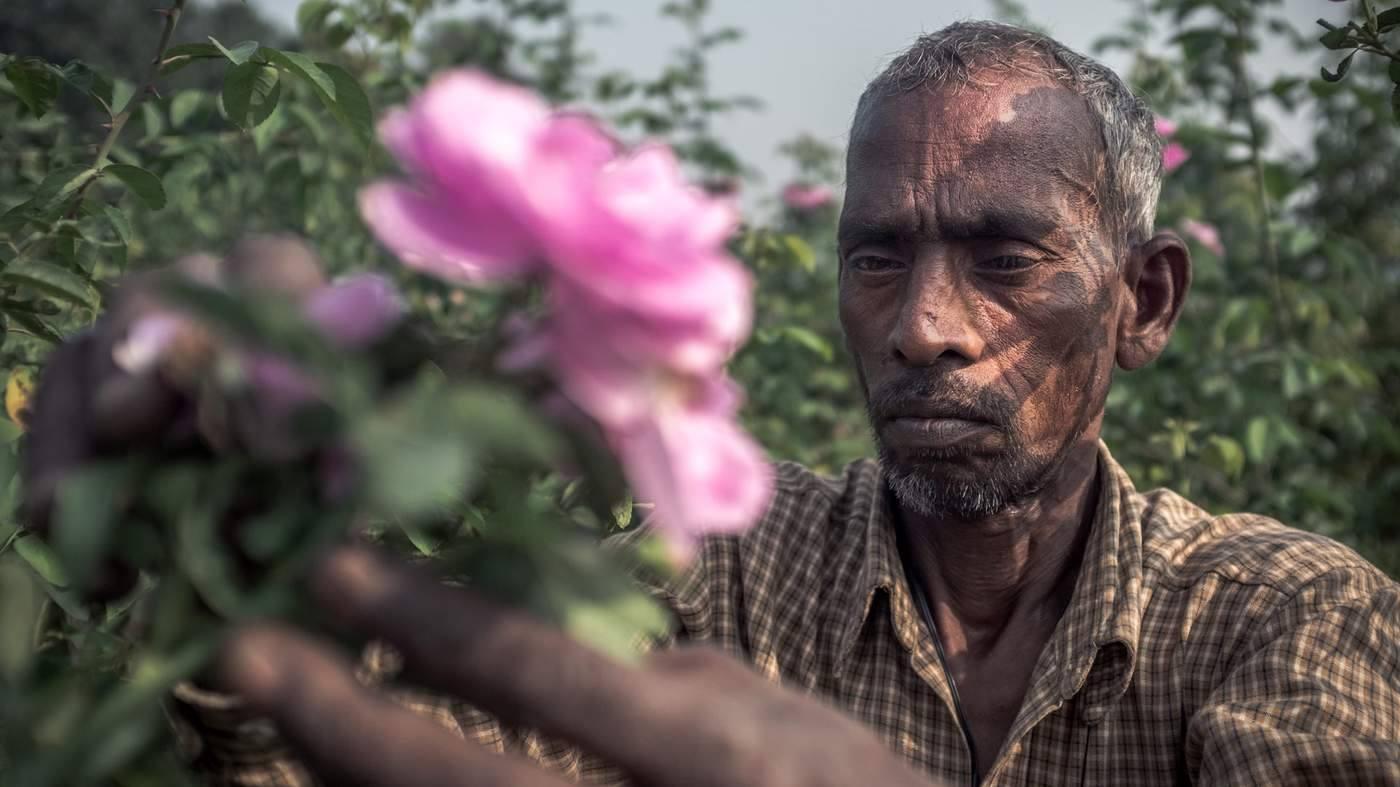 Kinh đô nước hoa của Ấn Độ, nơi cất giữ linh hồn của những mùi hương và cuộc chiến với ngành nước hoa công nghiệp - Ảnh 3.