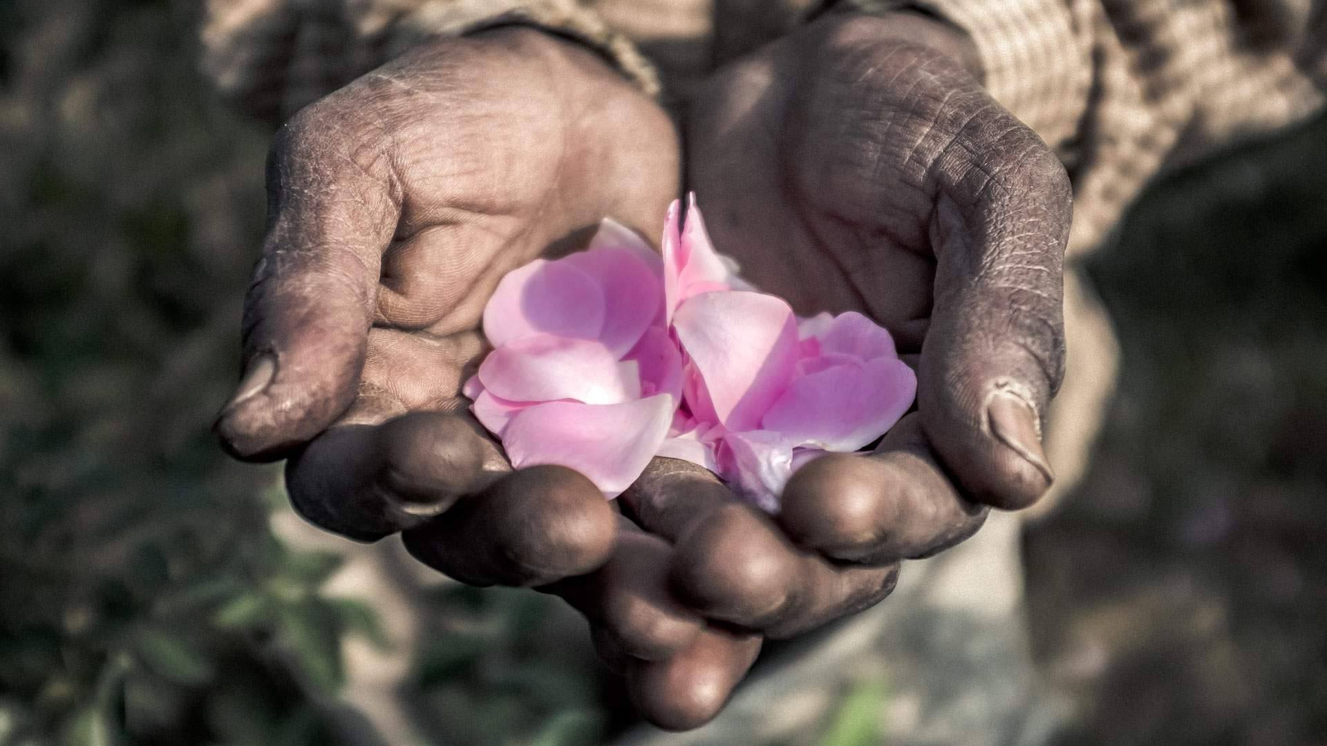 Kinh đô nước hoa của Ấn Độ, nơi cất giữ linh hồn của những mùi hương và cuộc chiến với ngành nước hoa công nghiệp - Ảnh 2.