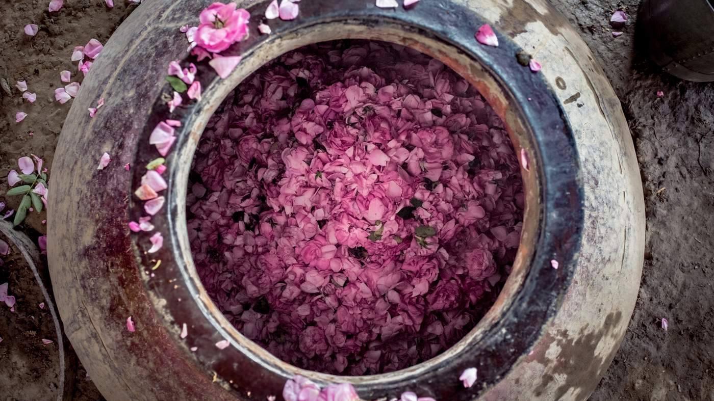 Kinh đô nước hoa của Ấn Độ, nơi cất giữ linh hồn của những mùi hương và cuộc chiến với ngành nước hoa công nghiệp - Ảnh 11.