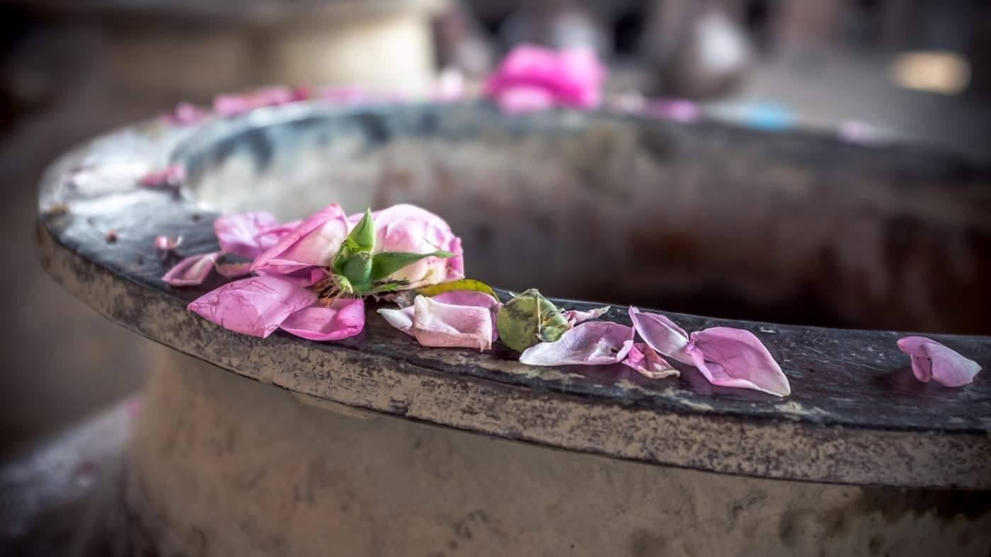 Kinh đô nước hoa của Ấn Độ, nơi cất giữ linh hồn của những mùi hương và cuộc chiến với ngành nước hoa công nghiệp - Ảnh 13.