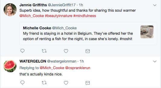 Kỳ lạ: Khách sạn cho thuê cá vàng giúp xoa dịu những tâm hồn cô đơn thuê phòng một mình - Ảnh 2.