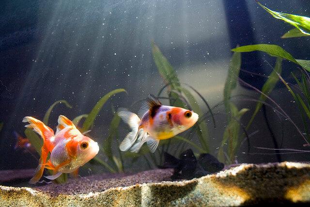 Kỳ lạ: Khách sạn cho thuê cá vàng giúp xoa dịu những tâm hồn cô đơn thuê phòng một mình - Ảnh 6.