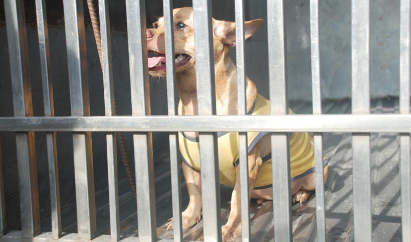 Nhìn cách quản lý thú cưng ngặt nghèo ở các nước phương Tây mới thấy cún ta vẫn còn sướng chán! - Ảnh 1.
