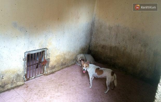 Clip cận cảnh quá trình chăm sóc tại điểm tập kết chó thả rông ở Sài Gòn trong lúc chờ chủ đến nhận - Ảnh 3.