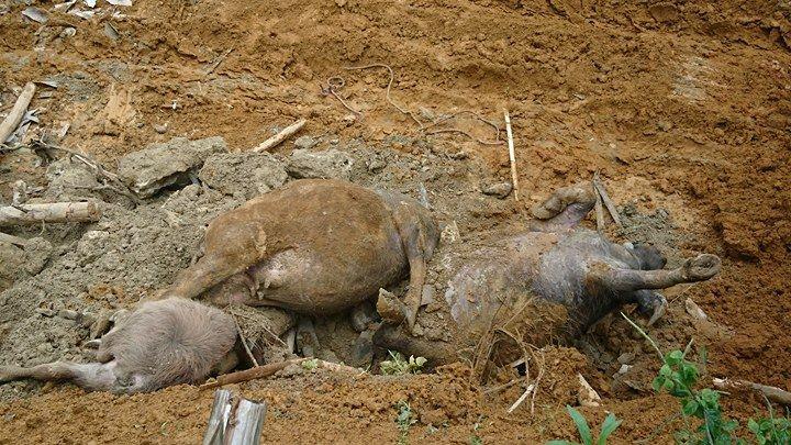 Sạt lở ở Hòa Bình: Tìm thấy 9 thi thể - Ảnh 18.