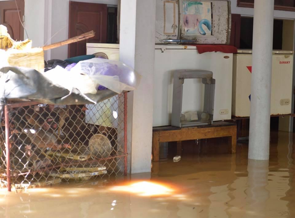 Chùm ảnh: Nhà ngập sâu đến ngang cửa, người dân Ninh Bình dùng chậu nhôm, ghế gỗ chèo thuyền đi lại trong ngõ - Ảnh 11.