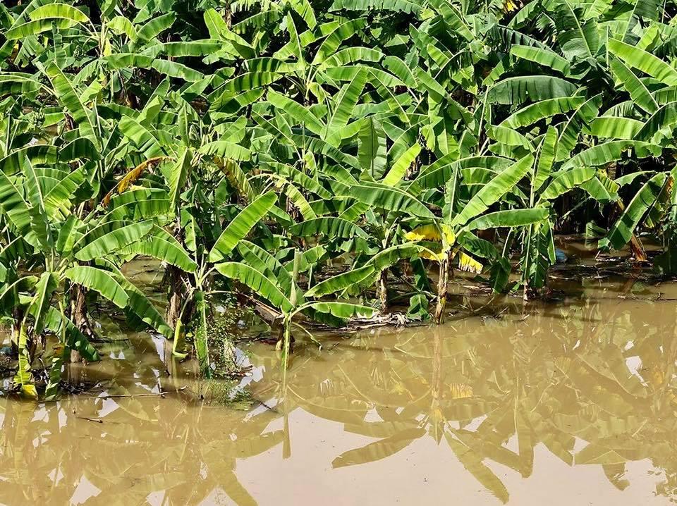 Nước sông Hồng dâng cao, nhiều hoa màu cùng nhà dân bị ngập, tàu thuyền không thể di chuyển qua cầu Long Biên - Ảnh 3.