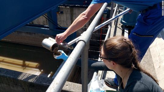Phát hiện bất ngờ trong nước thải ở Thụy Sĩ - Ảnh 1.
