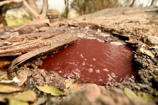 Dòng sông rượu vang sôi sùng sục sau cháy rừng ở California - Ảnh 1.