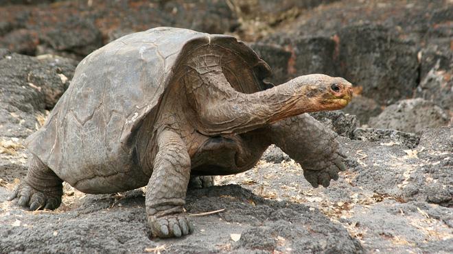 Bị vợ hỏi khó: một chú rùa bỏ cả đời đi vòng quanh Trái Đất được không? - Ảnh 1.