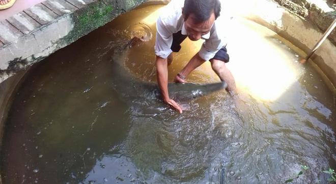 Mưa ngập cửa sổ, người dân ở Hà Nam bắt được cá sấu hỏa tiễn 28kg bơi vào nhà - Ảnh 2.