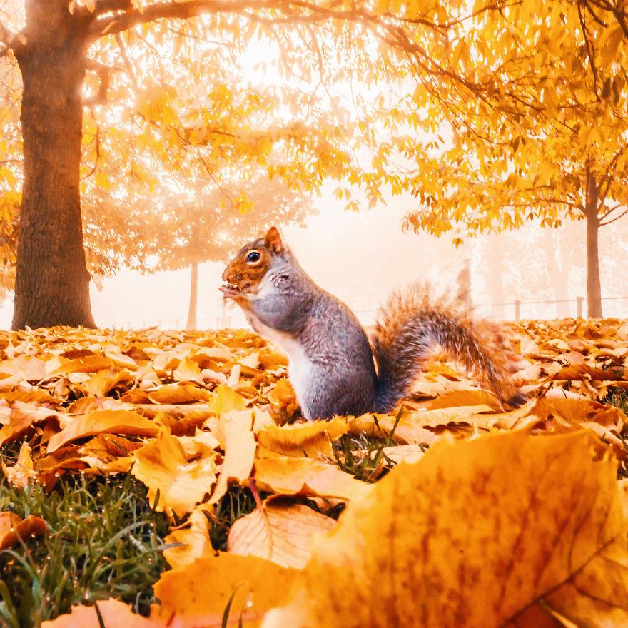 Khung cảnh thu lá vàng xuyến xao lòng người: Đâu phải ngẫu nhiên mà chúng ta yêu mùa thu đến vậy - Ảnh 17.