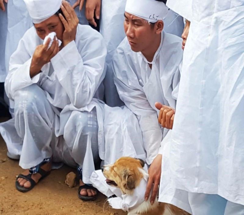 Cái chết uất hận của chú chó đang để tang chủ - Ảnh 2.
