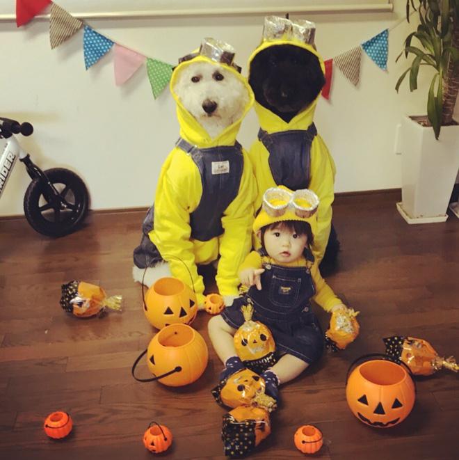 Loạt ảnh hóa trang Halloween hoành tráng nhất mạng xã hội của bé gái Nhật và những người bạn thú cưng - Ảnh 1.