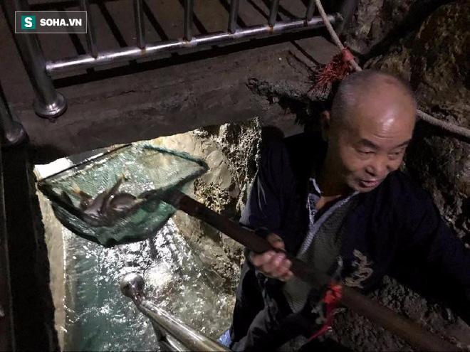 Lão nông vô tình đào được mạch suối đầy cá trong nhà, cứ có sấm sét là cả đàn cá xuất hiện - Ảnh 1.