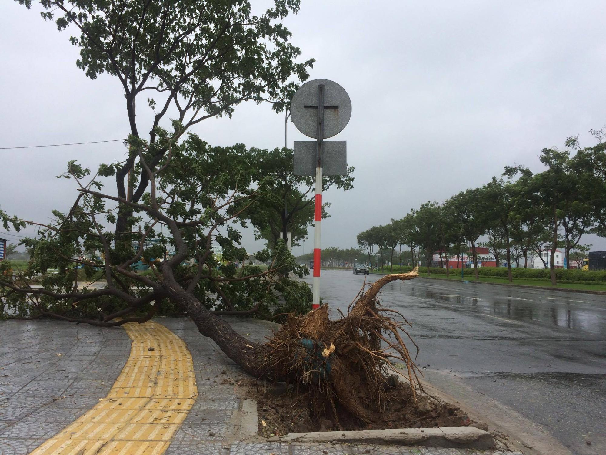 Ảnh hưởng bão số 12, Đà Nẵng đổ sập cổng chào, nhiều cây xanh bật gốc chắn ngang đường - Ảnh 2.