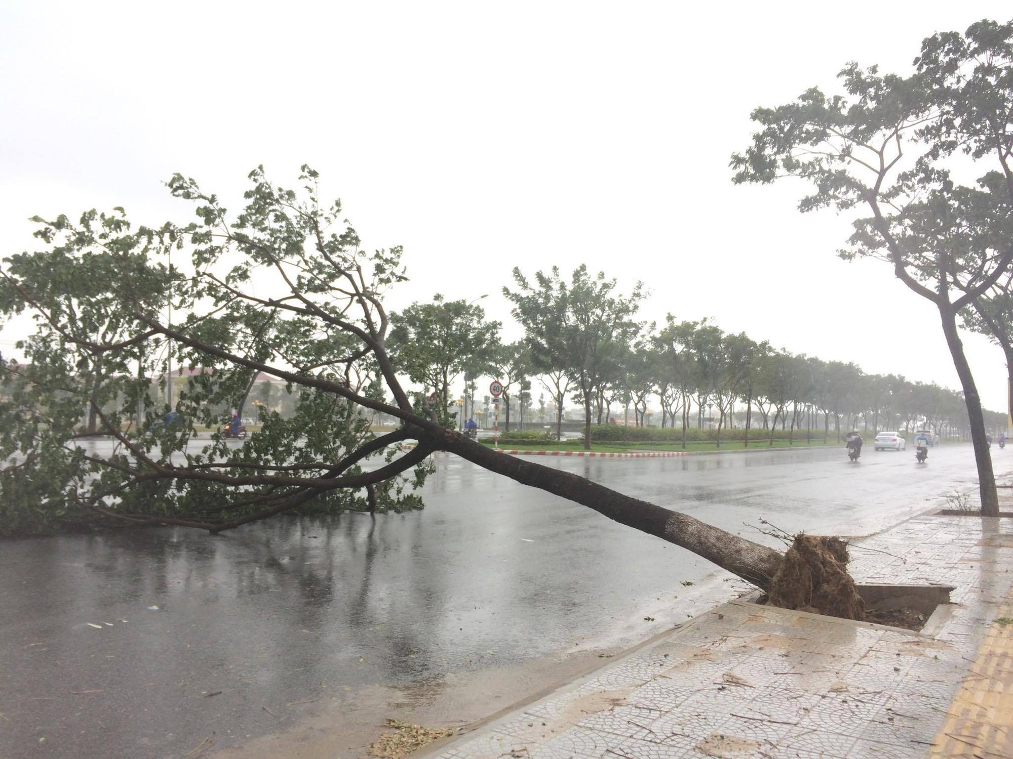 Ảnh hưởng bão số 12, Đà Nẵng đổ sập cổng chào, nhiều cây xanh bật gốc chắn ngang đường - Ảnh 3.