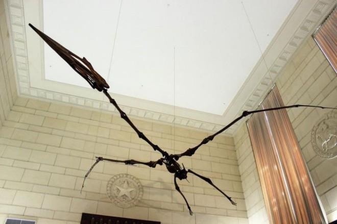 Thì ra Trái đất từng có loài sát thủ trên không to như chiếc máy bay và ăn thịt cả khủng long - Ảnh 1.