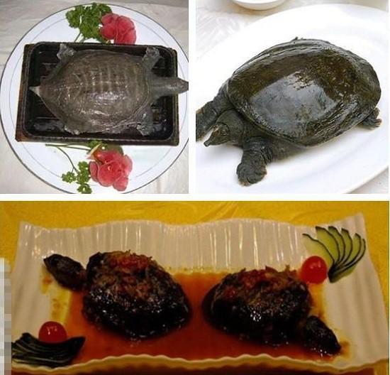 Rùng mình với súp rùa sống - món ăn kinh dị và tàn nhẫn nức tiếng Trung Quốc - Ảnh 1.