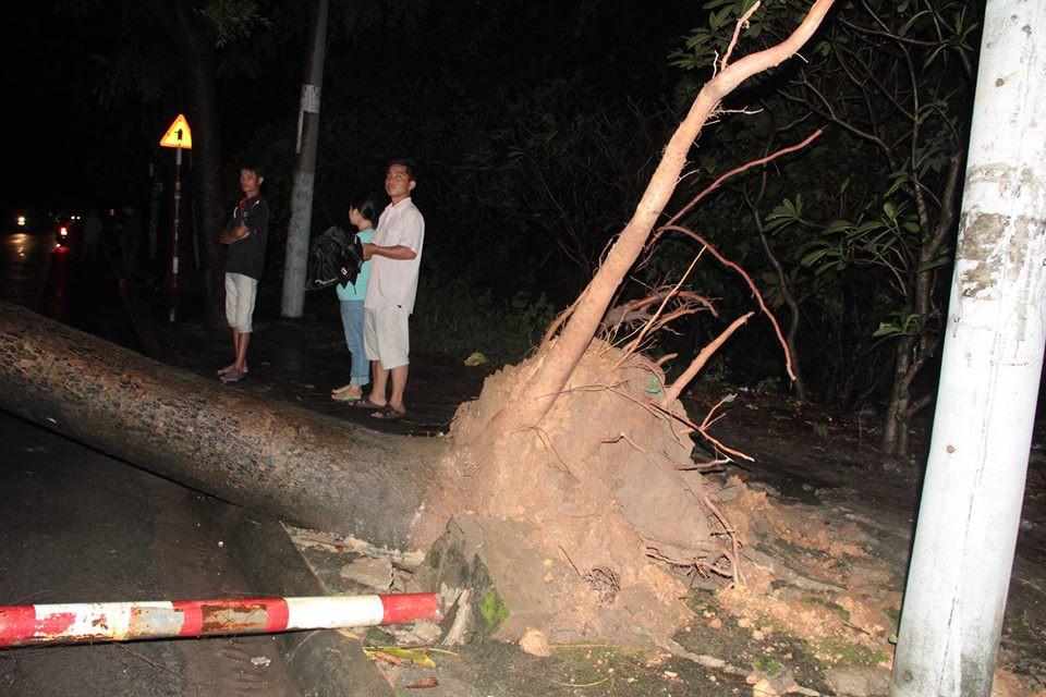 Mưa lớn ở Sài Gòn trước bão số 14, 10 cây xanh bật gốc trên đường làm đứt đường dây điện, đè sập mái nhà dân - Ảnh 1.