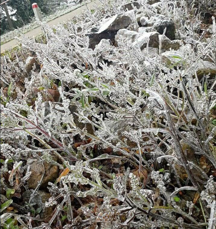 Nhiệt độ giảm còn 1 độ C, núi Phia Oắc (Cao Bằng) xuất hiện băng giá - Ảnh 3.