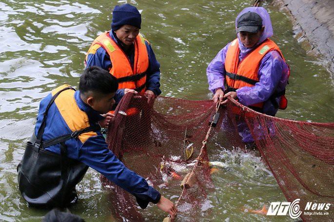 Ảnh: Công nhân ngâm mình trong nước lạnh dồn cá trước khi nạo vét Hồ Gươm - Ảnh 8.