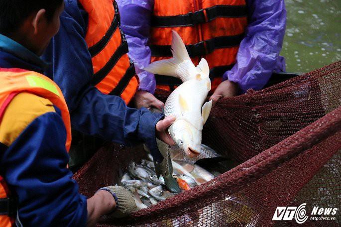 Ảnh: Công nhân ngâm mình trong nước lạnh dồn cá trước khi nạo vét Hồ Gươm - Ảnh 9.