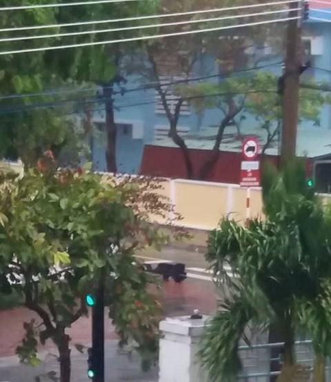 Video: Côn Đảo hứng bão Tembin, đèn đường, cây cối đổ rạp - Ảnh 1.