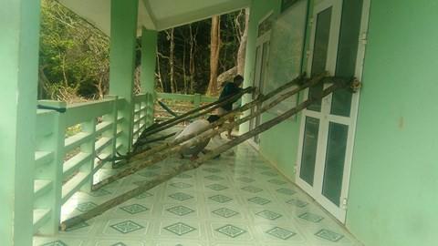 Video: Côn Đảo hứng bão Tembin, đèn đường, cây cối đổ rạp - Ảnh 3.