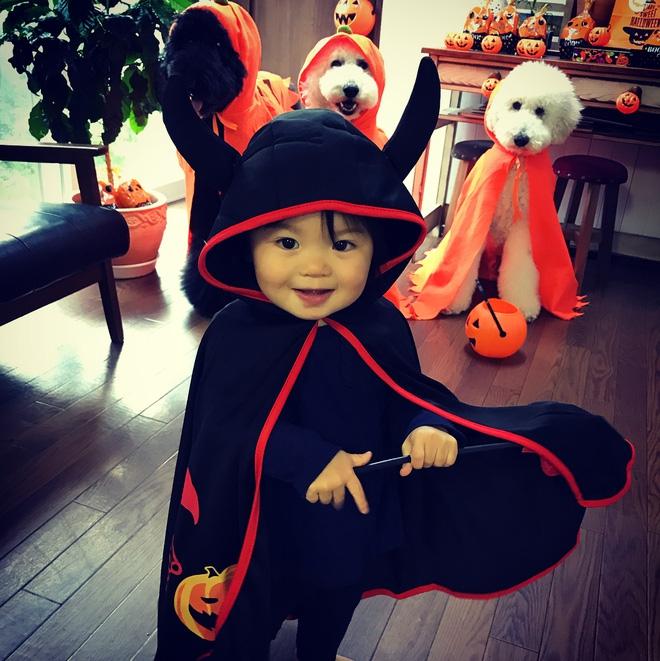 Loạt ảnh hóa trang Halloween hoành tráng nhất mạng xã hội của bé gái Nhật và những người bạn thú cưng - Ảnh 12.