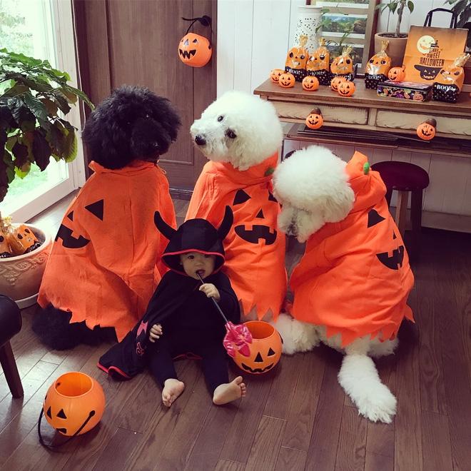 Loạt ảnh hóa trang Halloween hoành tráng nhất mạng xã hội của bé gái Nhật và những người bạn thú cưng - Ảnh 13.