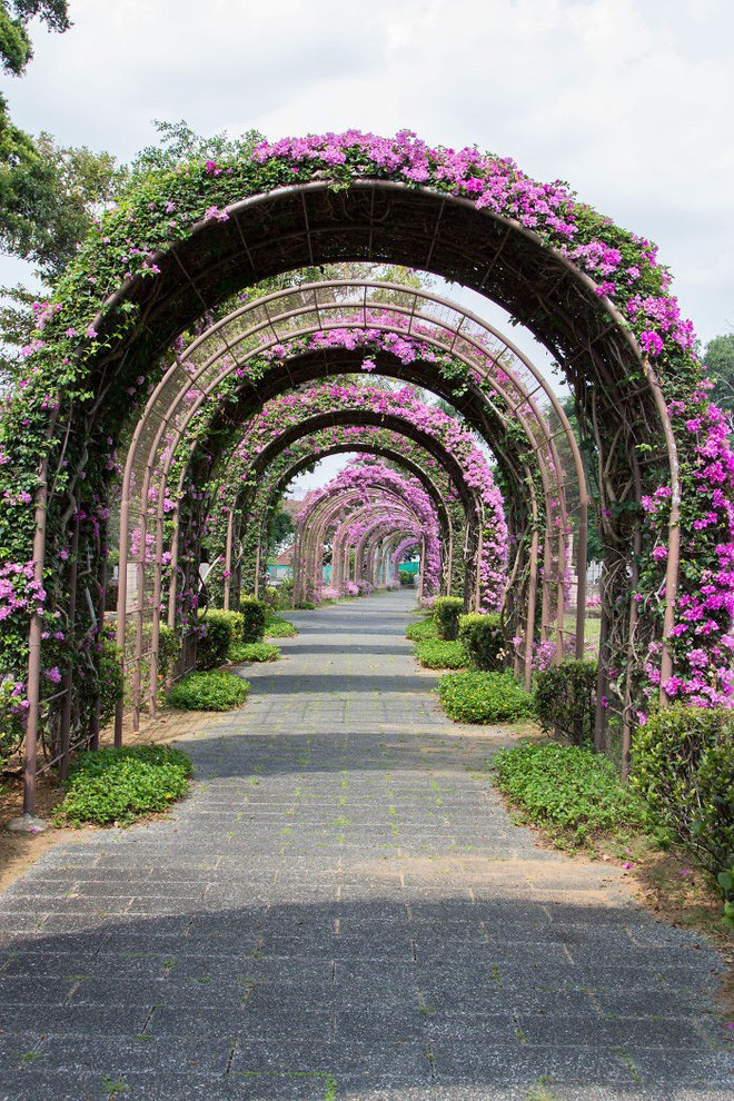 Những con đường phủ đầy hoa tươi như trong truyện cổ tích - Ảnh 14.