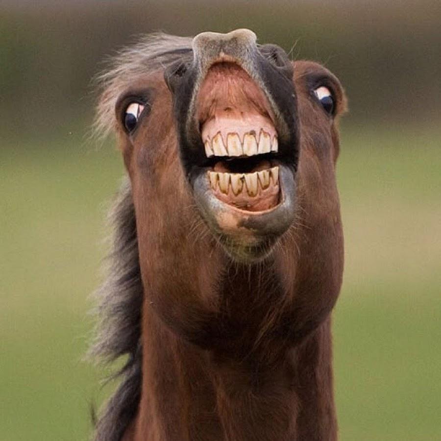 Khuôn mặt xấu đau đớn của 21 con vật kém ăn hình nhất quả đất -