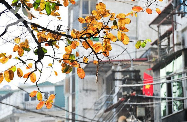 5 điểm đến mùa thu sẽ khiến bạn ngất ngây vì phong cảnh đẹp như trong mơ - Ảnh 18.