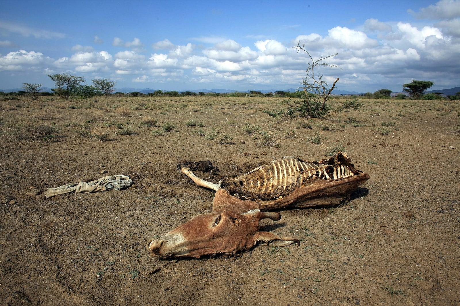 Bạn nghĩ trời nắng nóng? Thế giới còn đang chịu những thảm cảnh thời tiết khắc nghiệt hơn rất nhiều - Ảnh 3.