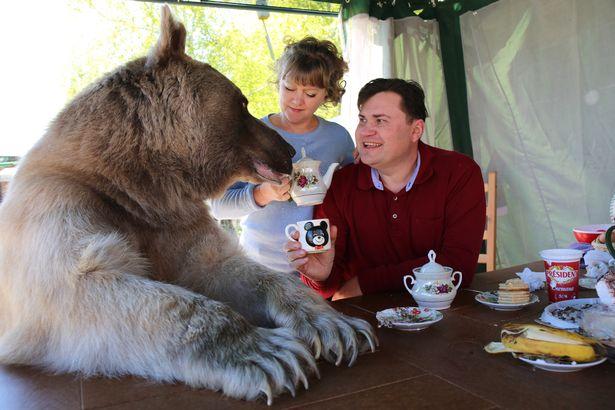 Nuôi thú cưng thế này mới đẳng cấp: Cặp đôi sống chung cùng chú gấu nặng 360kg suốt 24 năm - Ảnh 2.