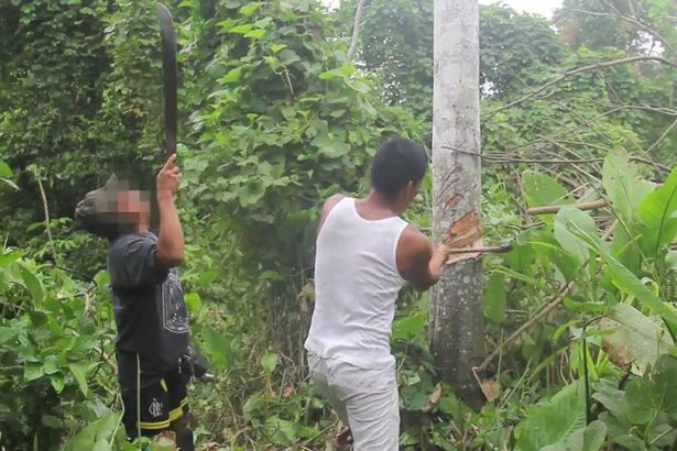 Những thợ săn đốn cây.