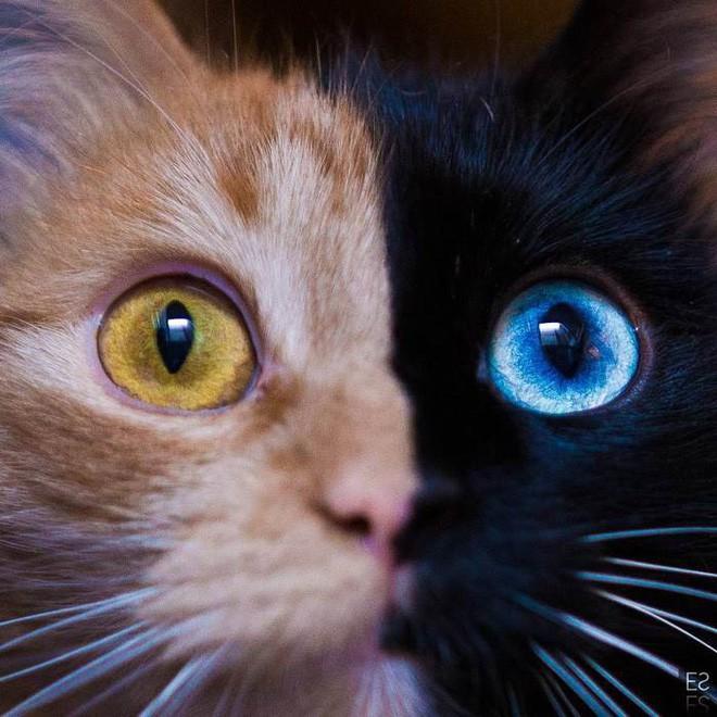 Trông như kết quả của một cuộc tình ngang trái, hóa ra cô mèo đặc biệt này gặp vấn đề về gen - Ảnh 3.