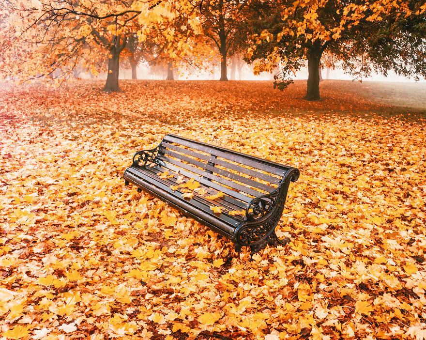 Khung cảnh thu lá vàng xuyến xao lòng người: Đâu phải ngẫu nhiên mà chúng ta yêu mùa thu đến vậy - Ảnh 8.