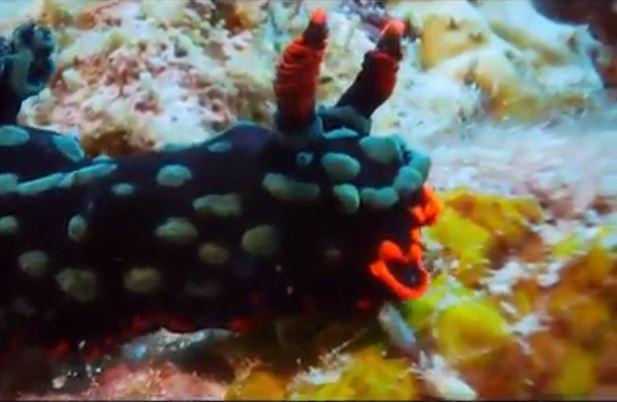 Con quái vật có chiếc sừng kỳ quái này ẩn mình dưới đáy đại dương, giữa những rặng san hô rực rỡ.