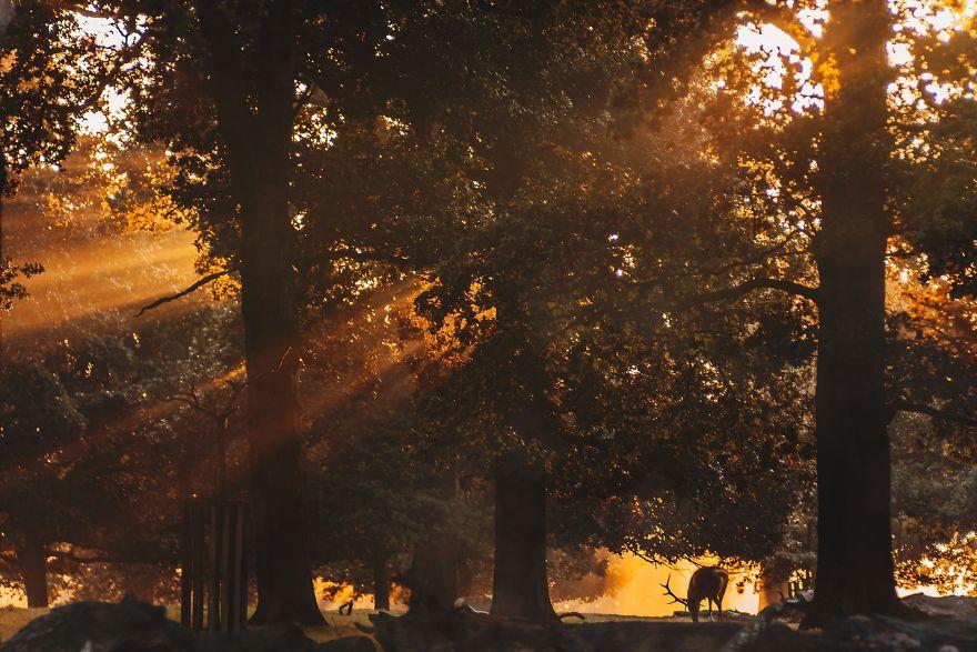 Khung cảnh thu lá vàng xuyến xao lòng người: Đâu phải ngẫu nhiên mà chúng ta yêu mùa thu đến vậy - Ảnh 18.