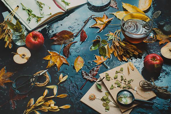 Bộ ảnh tĩnh vật mùa thu tuyệt đẹp dưới ống kính của nữ nhiếp ảnh gia người Nga - Ảnh 7.