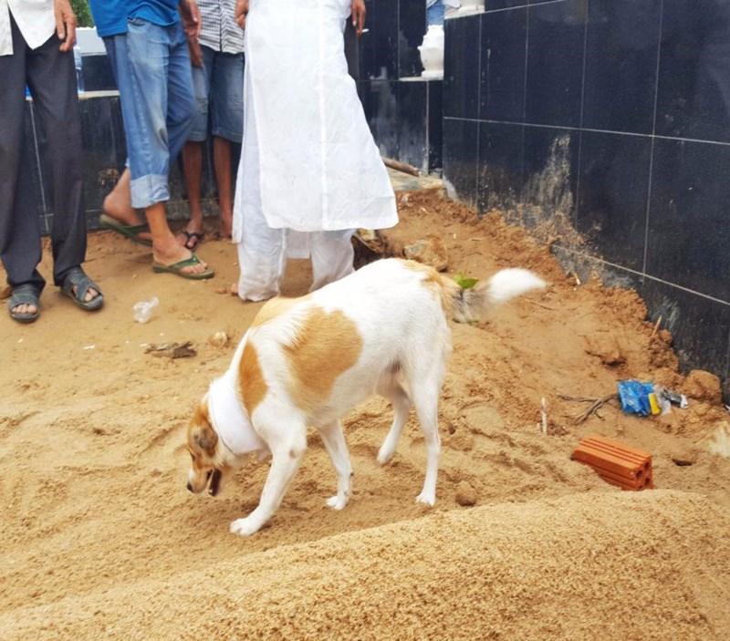 Cái chết uất hận của chú chó đang để tang chủ - Ảnh 4.
