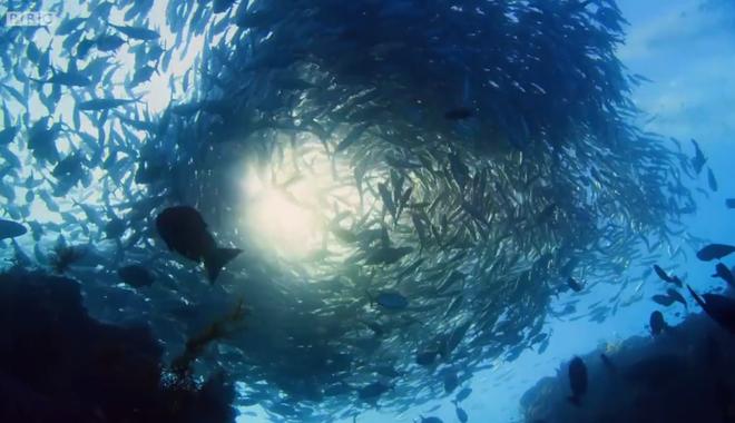 Bộ phim ghi lại hình ảnh của rất nhiều những loài sinh vật biển khác nhau.