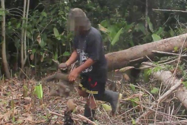 Con lười bị đưa ra khỏi cây gỗ cao.