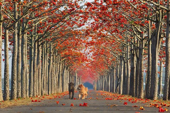 Những con đường phủ đầy hoa tươi như trong truyện cổ tích - Ảnh 5.