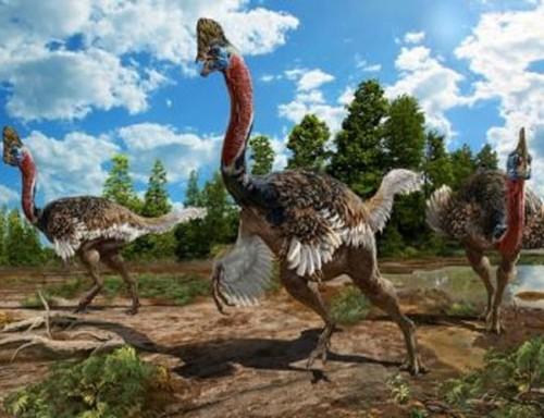 Cận cảnh loài chim nguy hiểm nhất thế giới được ghi trong kỷ lục Guinness - Ảnh 5.